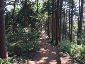 陣馬山から奈良子峠へ
