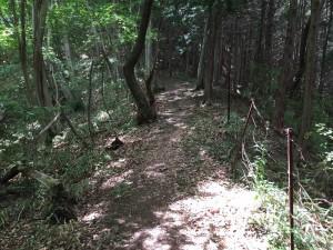 鷹取山登山道