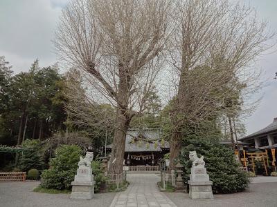 「亀ヶ池八幡宮 相模原での七五三」のアイキャッチ画像