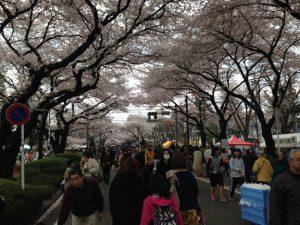 相模原市の桜まつり