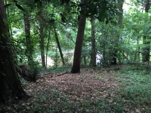 引引地川の源流である「泉の森」