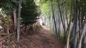 田名堀之内の竹林