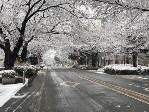 相模原市「西門」積雪情報