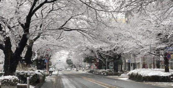 相模原の雪情報2018年3月21日