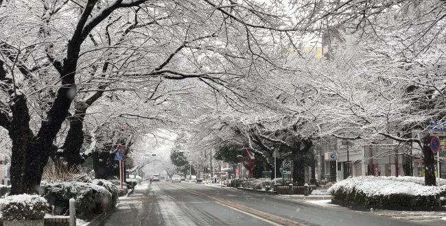 「2018年3月21日「相模原」積雪・道路情報・交通情報」のアイキャッチ画像